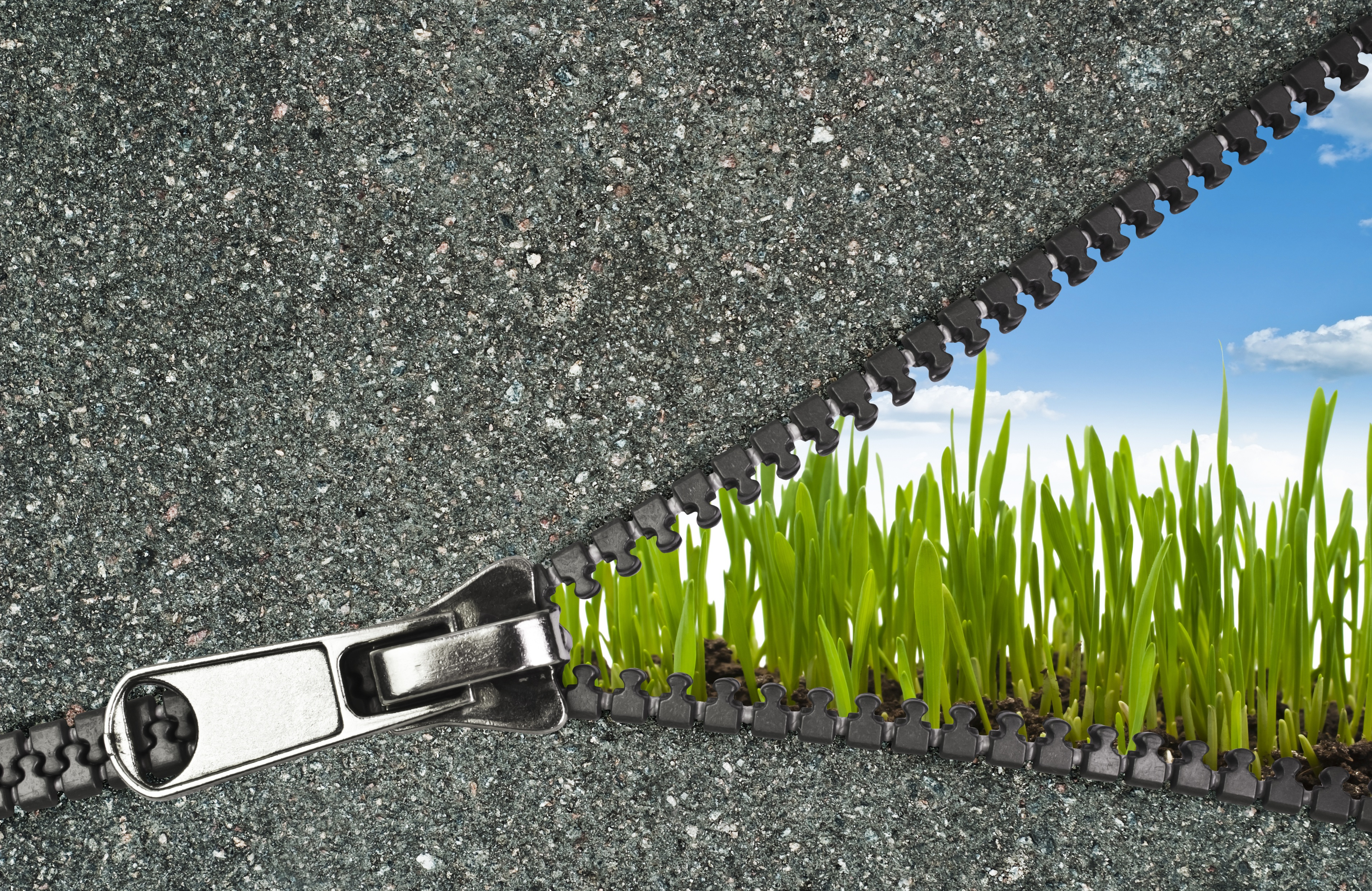 zipper image-1.jpeg